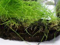 Биополотно с травосмесью